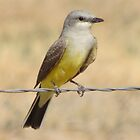 Western Kingbird  by Kimberly Chadwick