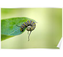 Balancing Nature Monarch Caterpillar Art Poster