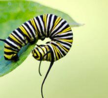 Balancing Nature Monarch Caterpillar Art Sticker