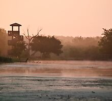 Brazos Bend Landscape by Diego  Re