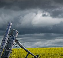 Canola Field in Southern Alberta by Randall Nyhof