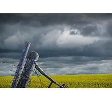 Canola Field in Southern Alberta Photographic Print