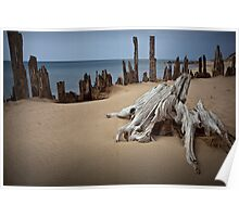 Tree Stump on the Beach at Kirk Park Poster