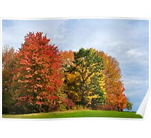 Autumn Colors Fall Trees Landscape Art Poster