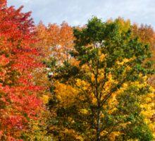 Autumn Colors Fall Trees Landscape Art Sticker