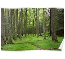 A Woodland Path in Cades Cove Poster