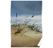 Dune and Beach Grass on Padre Island Poster