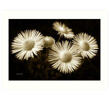 Monochrome Flowers Art Print