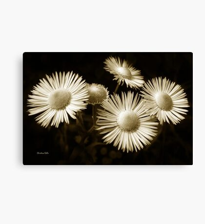 Monochrome Flowers Canvas Print
