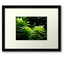 """""""Ferns and Fronds II"""" Framed Print"""