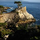 Lone Cypress, Pebble Beach, CA 2012 by J.D. Grubb