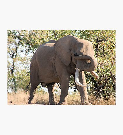 OUCH! GOT SOMETHING IN MY EYE - THE AFRICAN ELEPHANT – Loxodonta Africana Photographic Print