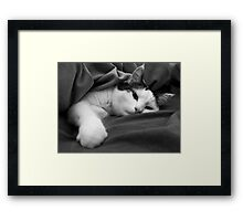 Munchkin in Mama's bed! Framed Print