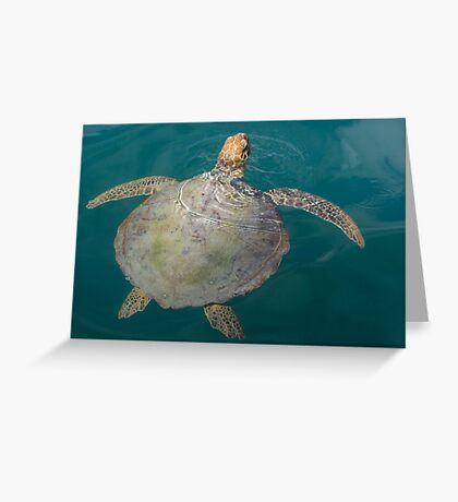 Green Turtle - Monkey Mia - WA Greeting Card
