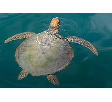 Green Turtle - Monkey Mia - WA Photographic Print