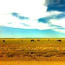 Horses  by melanie1313