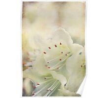 zarte Blüte Poster
