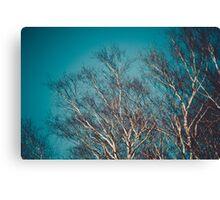 Himmelsbaum Canvas Print