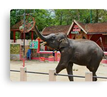 Elephants at Thailand Zoo Canvas Print