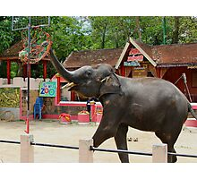Elephants at Thailand Zoo Photographic Print
