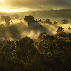 Morning Gentle... by debsphotos