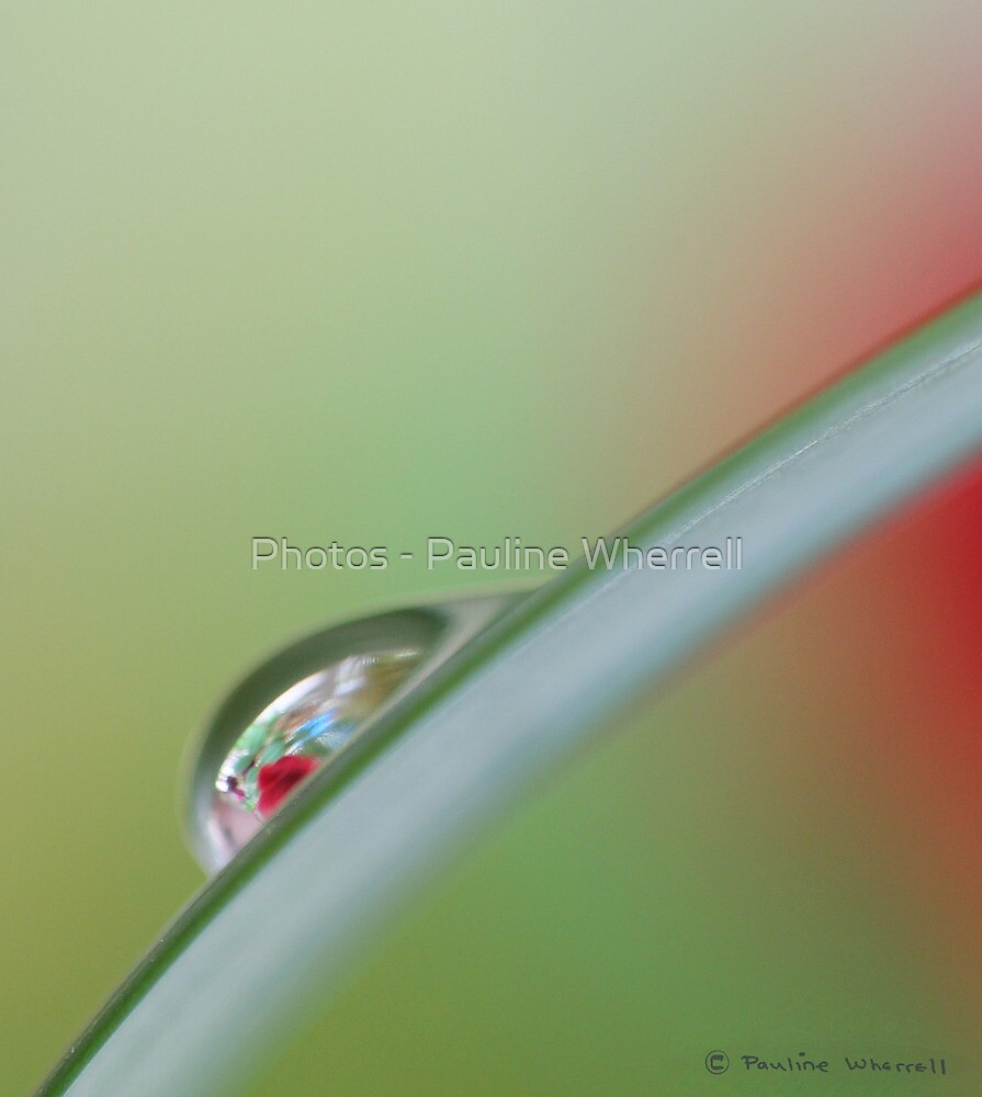 Simplicity in red and green by Photos - Pauline Wherrell
