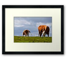 Sometimes all you need is a good scratch  Framed Print