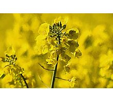 Very Yellow with Liquid Lines texture Photographic Print