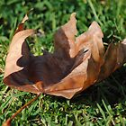 A Leaf in the Autumn Breeze by Heather Samsa