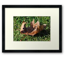 A Leaf in the Autumn Breeze Framed Print