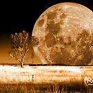Two Trees and a Supermoon by Riaan Roux