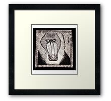 Meanwhile Back In Africa: A Mandrill Framed Print