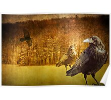 Ravens at Hall Lake Poster
