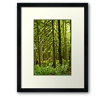 Rain Forest on Vancouver Island Framed Print