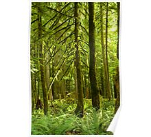 Rain Forest on Vancouver Island Poster