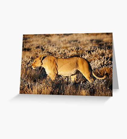 Lioness in profile Greeting Card