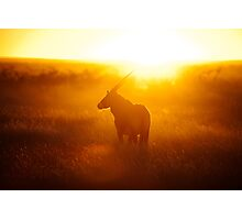 Oryx at sunset Photographic Print