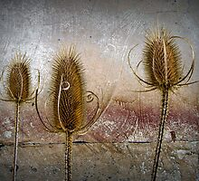 Three Prickly Teasels by Randall Nyhof