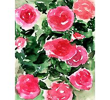 Watercolor Roses  Photographic Print