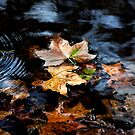 Autumn Leaves - Splash of Green by Sandra Chung