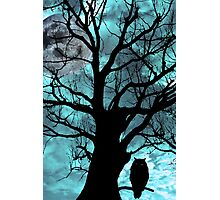 owl perched in ancient tree on moonlit night Photographic Print