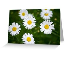 Fresh Daisy Bouquet Greeting Card