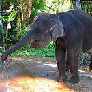 Water for Elephant by Brendan Buckley