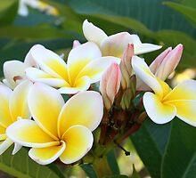 Flowering Tree by John (Mike)  Dobson