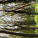 Spring in the forest by Vasil Popov