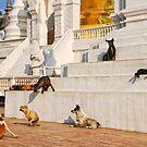 Temple Dogs by Brendan Buckley