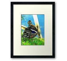 Im ready for my close up Mr Duckville! Framed Print