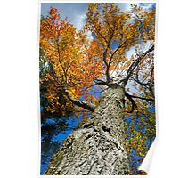 Fall Maple Tree Landscape Poster