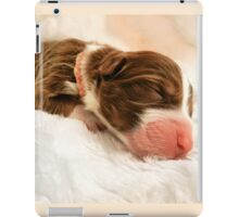 Australian Shepherd Puppy Dog Newborn Peach iPad Case/Skin