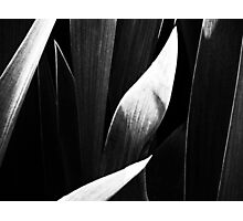 Untitled Monochrome Photographic Print